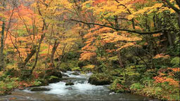 Oirase in autumn colors Stock Video Footage