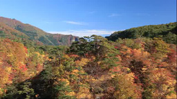 Naruko Gorge in autumn Footage