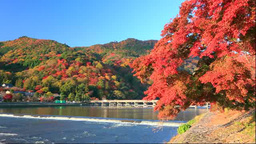 Arashiyama in autumn colurs and Togetsukyo Bridge Stock Video Footage