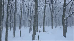 Snowfall in a forest Footage