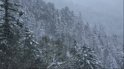 雪降る針葉樹の森 Stock Video Footage