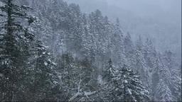 雪降る針葉樹の森 Footage