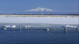 Swans in Lake Tofutsu and Mount Shari Stock Video Footage