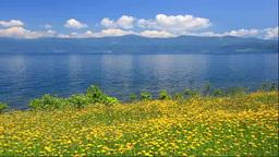 洞爺湖とタンポポモドキ Footage