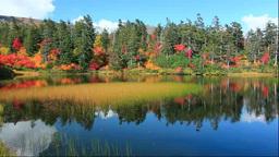 大雪山の高原温泉の緑の沼の紅葉 Footage