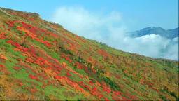 大雪山の銀泉台の紅葉 Footage