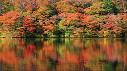 白神山地の十二湖の越口の池の紅葉 Stock Video Footage