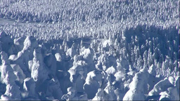 蔵王の樹氷 Stock Video Footage