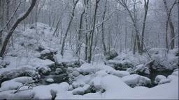 冬の奥入瀬渓流 Stock Video Footage
