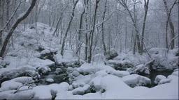 冬の奥入瀬渓流 Footage