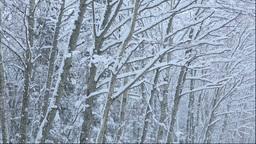 北海道 雪降る森 Stock Video Footage
