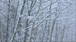 北海道 雪降る森 Footage