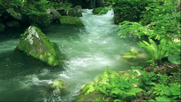 奥入瀬渓流の阿修羅の流れ Stock Video Footage