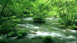 奥入瀬渓流の阿修羅の流れ三乱の流れ Stock Video Footage