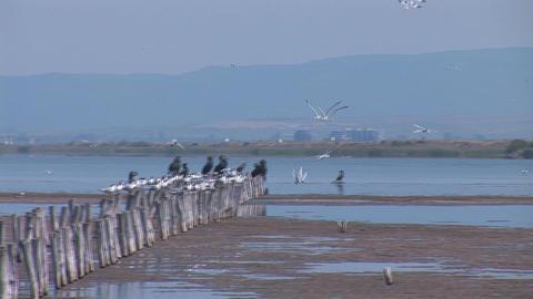 birds 1 Footage