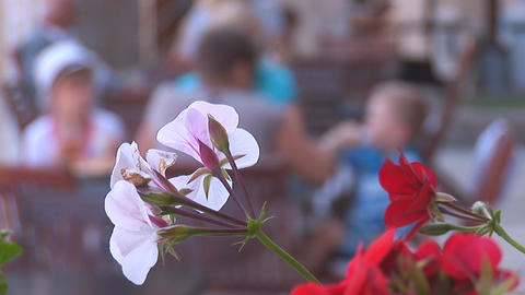flowers 2 Stock Video Footage