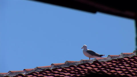 seagull 1 Stock Video Footage