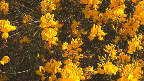 yellow flowers 2 Stock Video Footage