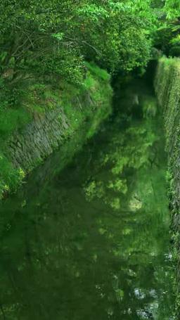 Philosopher's walk's fresh greenery Footage