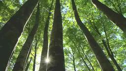 鍋倉山のブナ林と太陽 Footage