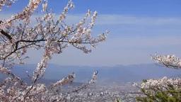 米山城跡から望む上田市街遠望と桜 영상물