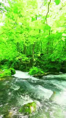 Oirase mountain stream ภาพวิดีโอ