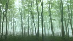霧の鍋倉山のブナ林 Footage
