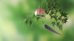新緑の紅葉にピンクの風鈴 Footage