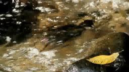 渓流と落ち葉 Footage