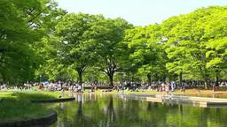 Freshly green Yoyogi Park Footage