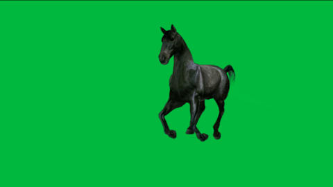 horse running with green screen Stock Video Footage