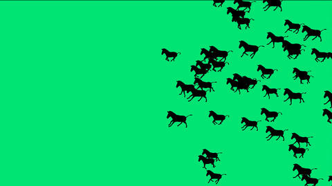 a group of horses silhouette running with green screen Stock Video Footage