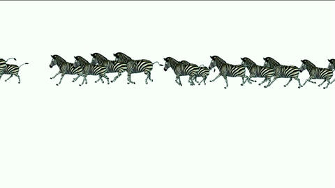 a group of zebra running Animation