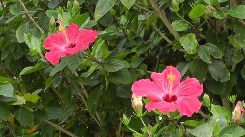 Beauty Tropical Flowers 01 Stock Video Footage