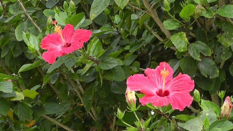 Beauty Tropical Flowers 01 Footage