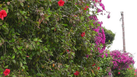 Flowers along Fence on a Street 01 Stock Video Footage