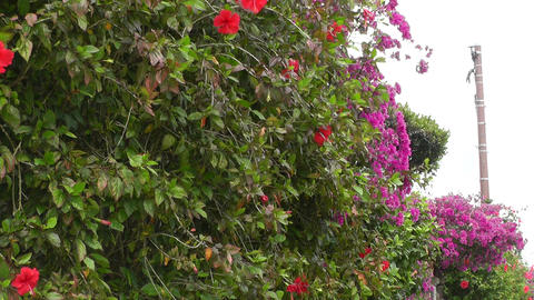 Flowers along Fence on a Street 01 Footage
