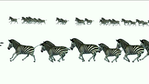 a group of zebra running Stock Video Footage