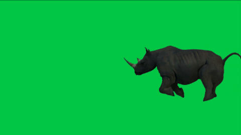 rhino running with green background Stock Video Footage
