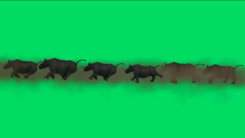 rhino running with green background Animation