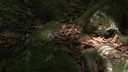 Shadows moving over moss covered rocks Footage