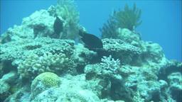 珊瑚礁といろいろな魚たち Footage
