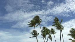 椰子の木 Footage