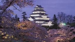 鶴ケ城(会津若松城)の夜桜 Footage