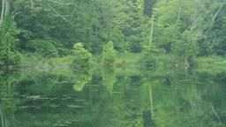 富良野の鳥沼公園 Footage