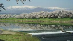 白石川一目千本桜と蔵王 Footage