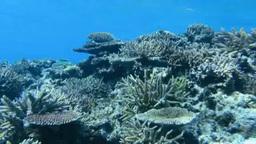 黒島の珊瑚礁 Footage