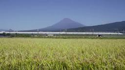 富士市側から富士山と稲穂と東海道新幹線 Footage