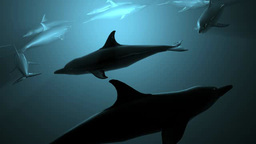 イルカのイメージ Footage