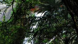 滝と森のシルエット Footage